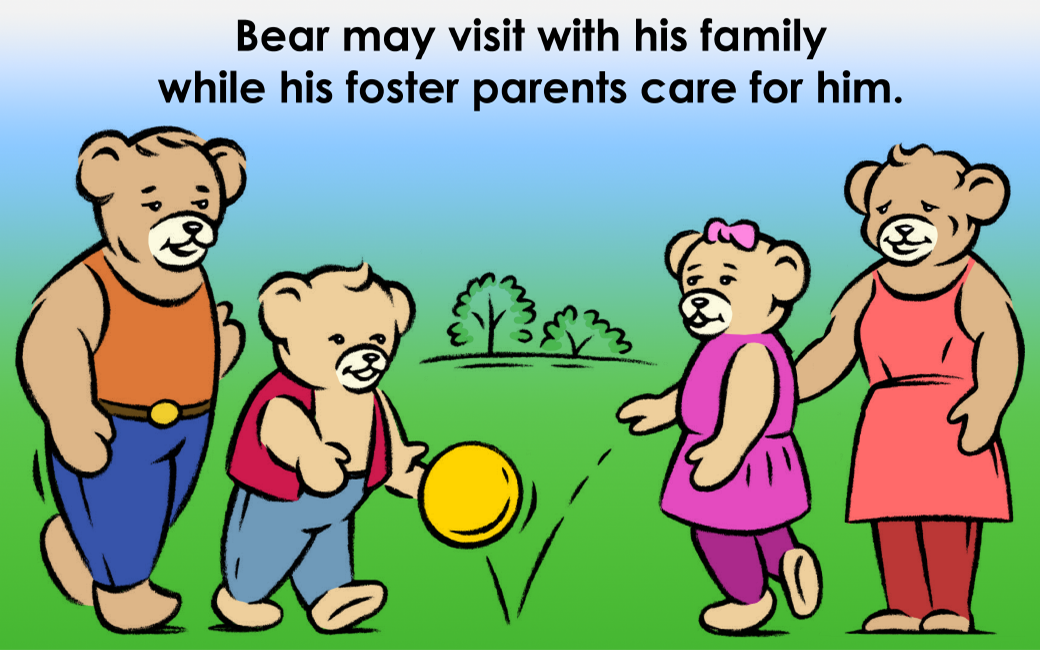 Bear may visit with his family while his foster parents care for him.